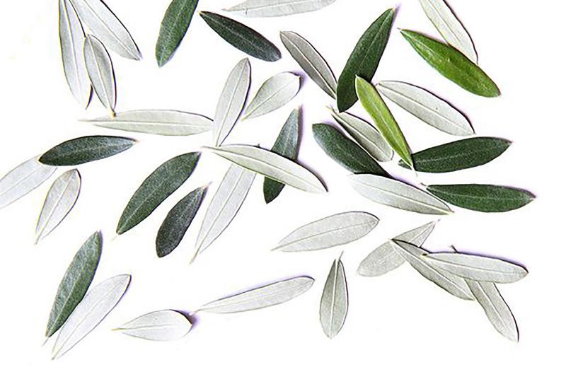 cucina-cubo_foglie